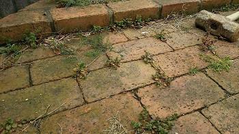 レンガの隙間から生える雑草