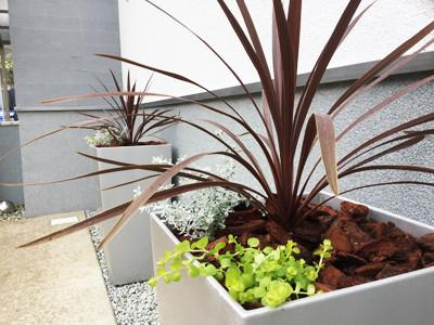 プランターの植物
