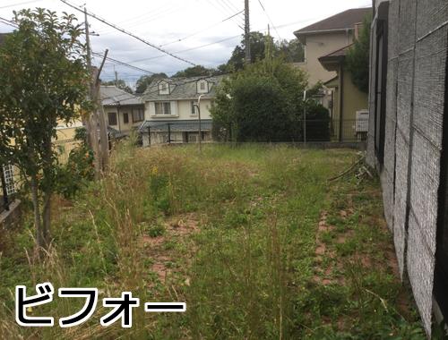 草がたくさん茂る庭