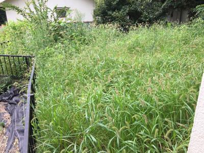 リフォーム前の草だらけの庭