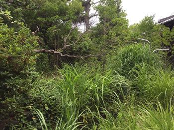 庭リフォーム前の草が茂る庭3.jpg