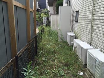 草が茂る裏庭