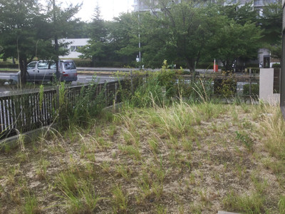フェンス工事前の草だらけの庭