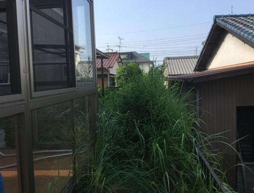 草だらけの庭
