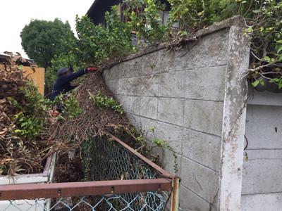 ブロック塀に蔓延るツタの撤去作業風景jpg
