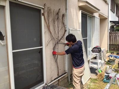 絡みついた植物の撤去
