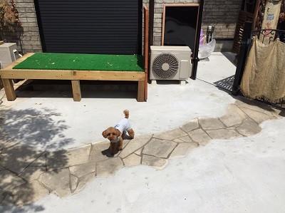 コンクリートの庭と犬