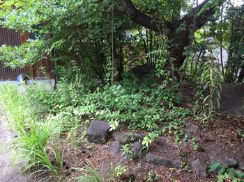 雑草対策前の草が茂る庭2