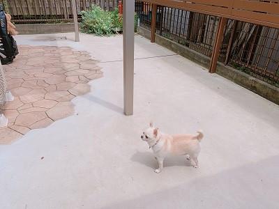 リフォーム後の庭にいる犬