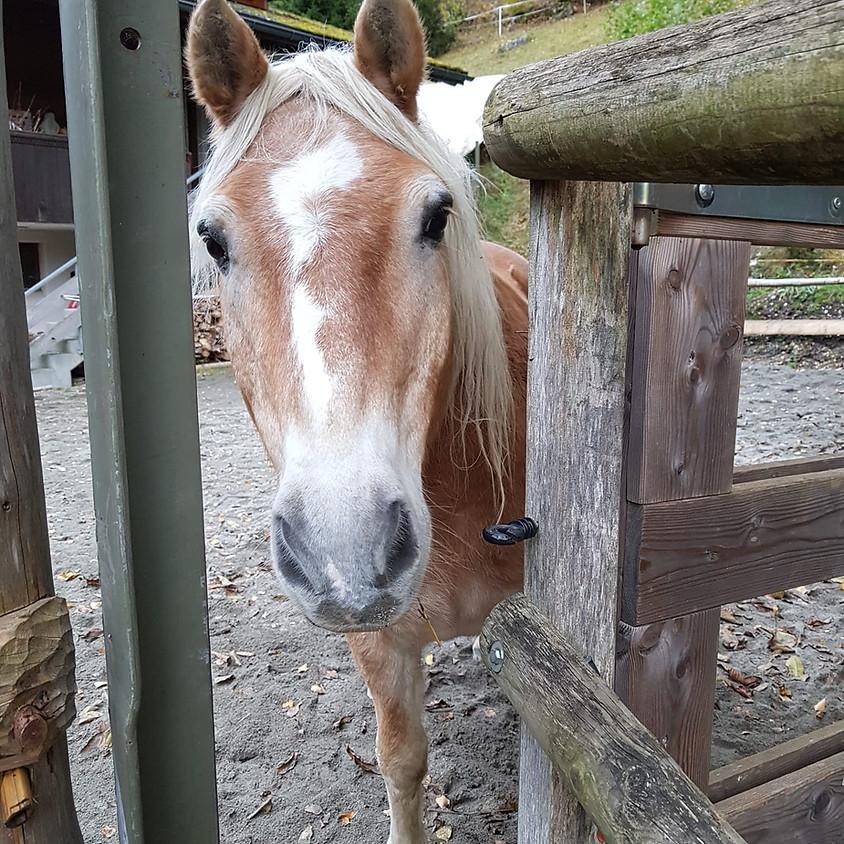 Pferden zuhören - Online