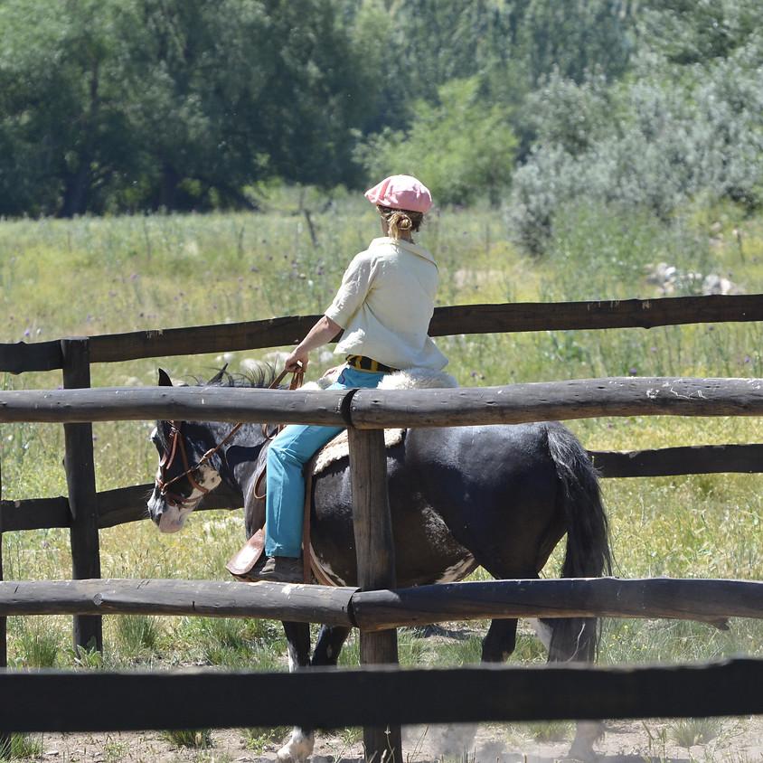 Pferde ausbilden lernen