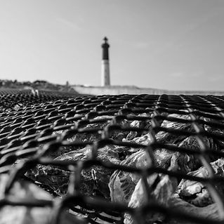 Huîtres et Coquillages Ile de Sein