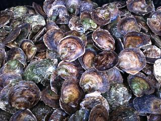 Les huîtres plates du Bélon affinées sur  l'Ile de Sein...un délice