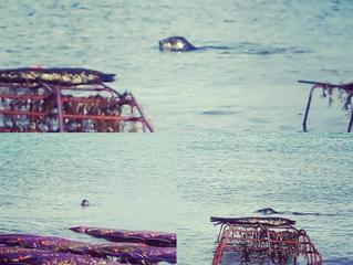 On nous observe, même à la marée