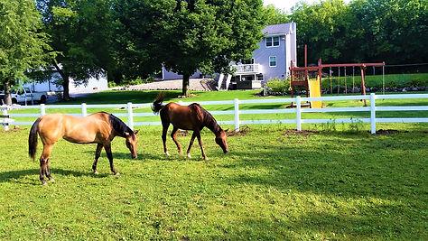 Electrobraid Horse Fence - Behl Fence Wisconsin