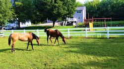 3 Rail Vinyl Horse Fence - Behl Fence LLC