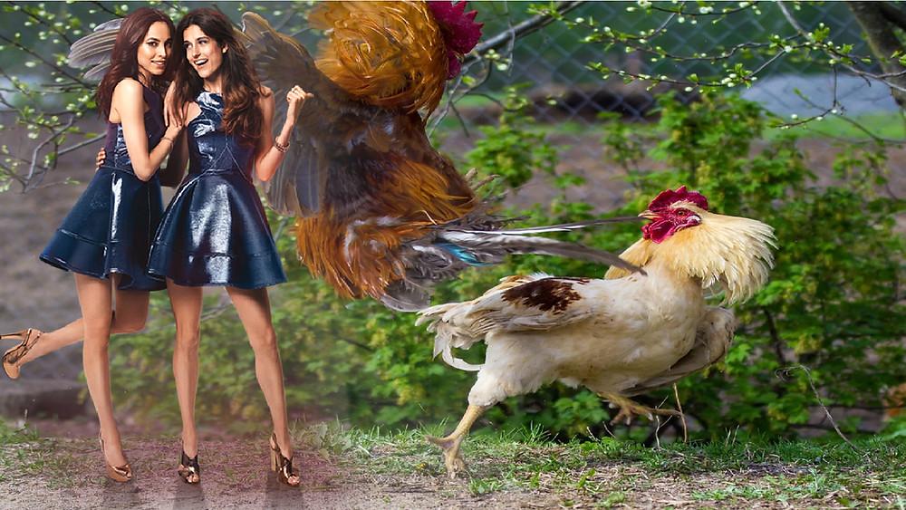 Inilah Deretan Ayam Aduan Termahal Yang Pernah Ada
