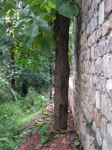 no-tree-cutting2