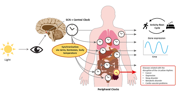 Peripheral Clock_EN.png