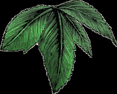 Leaf-001.png