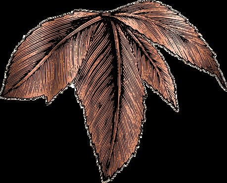 Leaf-002.png