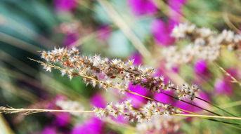 GRASS SEADS
