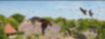 Le Bal des Oiseaux Fantomes  Grand Parc du Puy du Fou