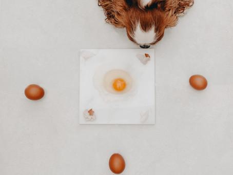 Eggs? Dangerous or super foods?
