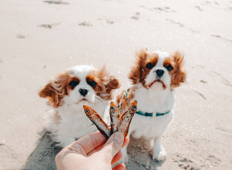 Sprats for Dogs - The best treats in the world!