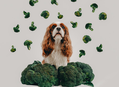 Broccoli for my dog?