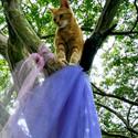 Fairy Cat Glamor