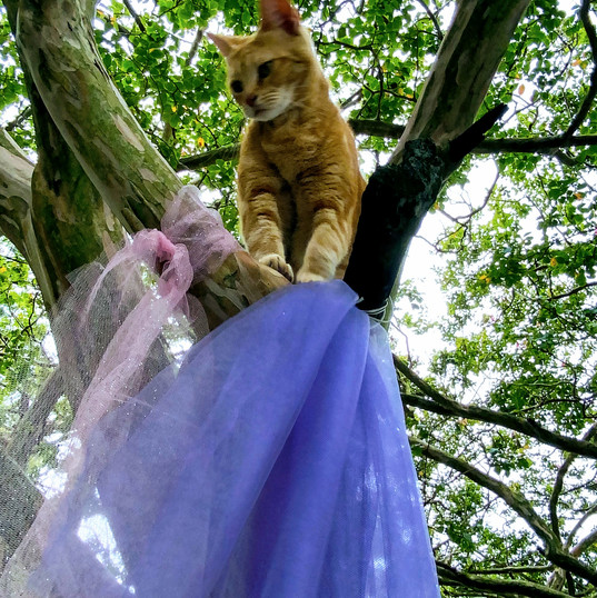 Fairy Cat Glamor