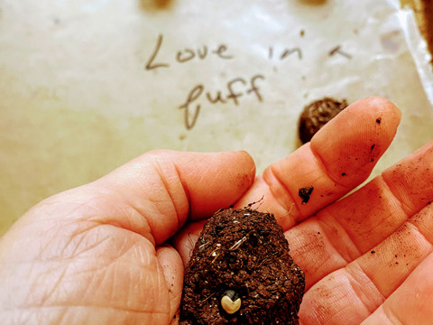 "Guerilla Gardening: Making Esna's fairy ""Seed-Bombs"""