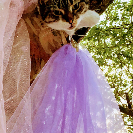Queen's Cat Glamor