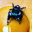 Jinx's Spider Glamor 1