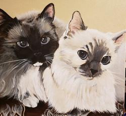 Pair of Feline Beauties