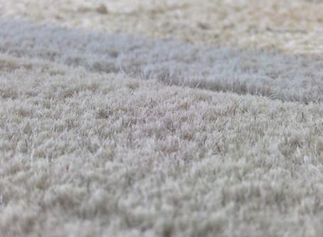 Wool Carpet : Perkara asas yang anda perlu tahu..