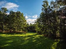 Trees-In-Darlting-West-Park.jpg