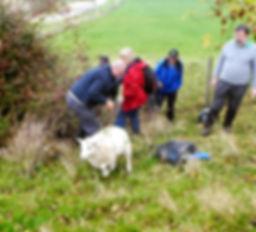 sheep rescue 2.jpg