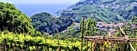 vigna-campania-vino-171720.jpg