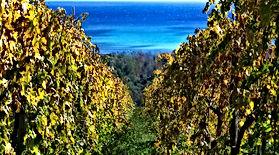 Vini Italiani - Calabria v.1.2.jpg