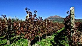 Italian Wines v1.9_html_35248f66.jpg