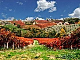 Italian Wines v1.9_html_46a2104b.jpg