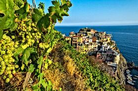 Italian Wines v1.9_html_m6c7f2af2.jpg