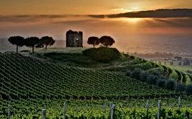Italian Wines v1.9_html_49a442d9.jpg