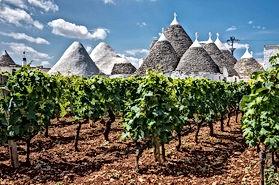 puglia-vines-trulli-1.jpg