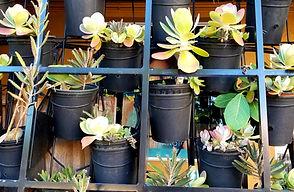 plants in boxes.jpg