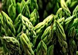 vegetables-asparagus-mary-washington-745