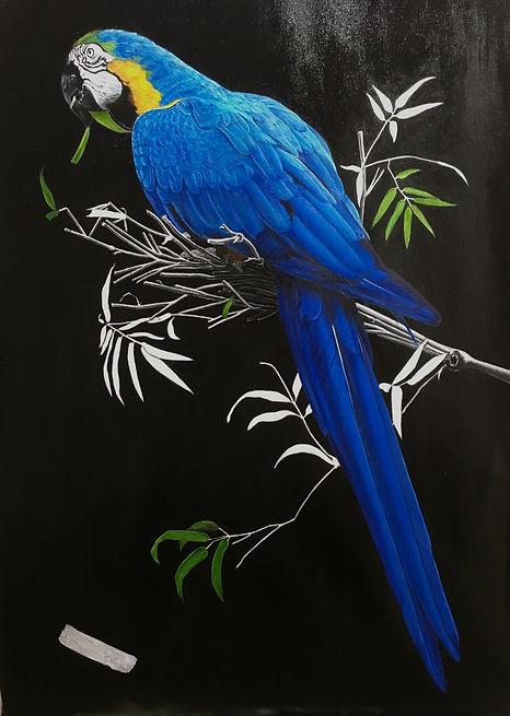 blue parrot 3.JPG