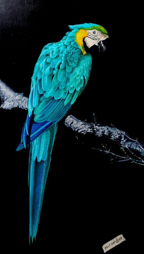 blue parrot 2.JPG